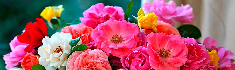 Заказ цветов оптом через интернет одесса — img 1